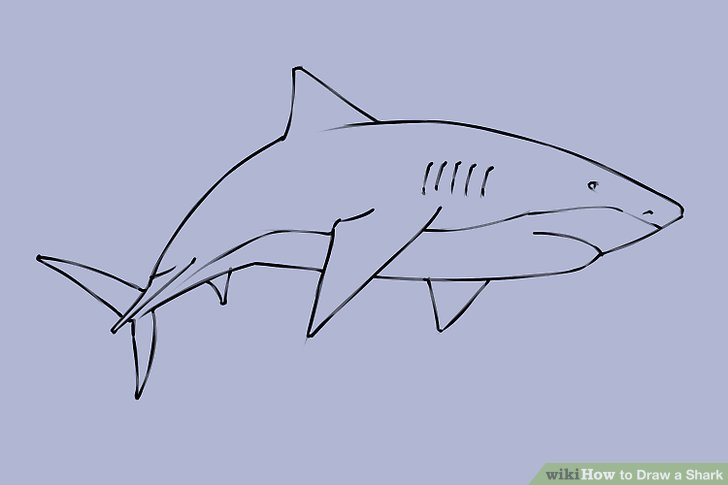 4 Ways to Draw a Shark   wikiHow Image titled Draw a Shark Step 19