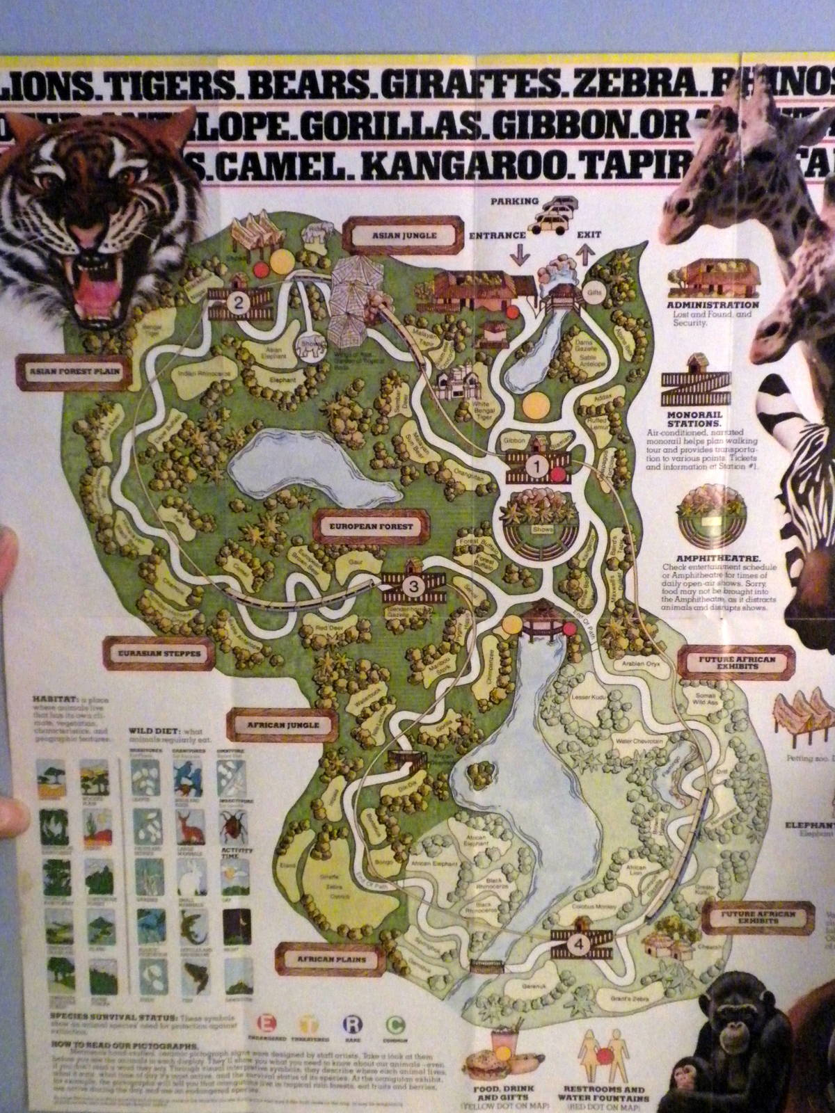 Scanned Miami Metro Zoo Photos 1990 2006   ZooChat Scanned Miami Metro Zoo Photos 1990 2006