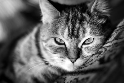Cat Wallpapers High Quality | Download Free