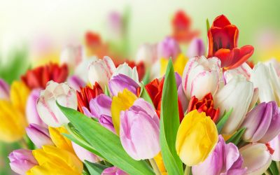 4K Spring Wallpapers High Quality | Download Free