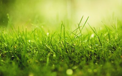 Grass Wallpapers High Quality | Download Free