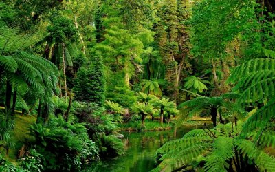 Jungle Wallpapers High Quality | Download Free