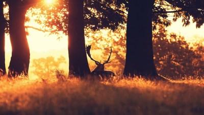 4K Deer Wallpapers High Quality   Download Free
