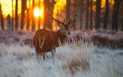 4K Deer Wallpapers High Quality | Download Free