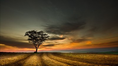 4K Lonely Tree Wallpapers High Quality | Download Free