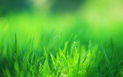 4K Green Grass Wallpapers High Quality | Download Free