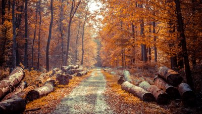 4K Autumn Wallpapers High Quality | Download Free