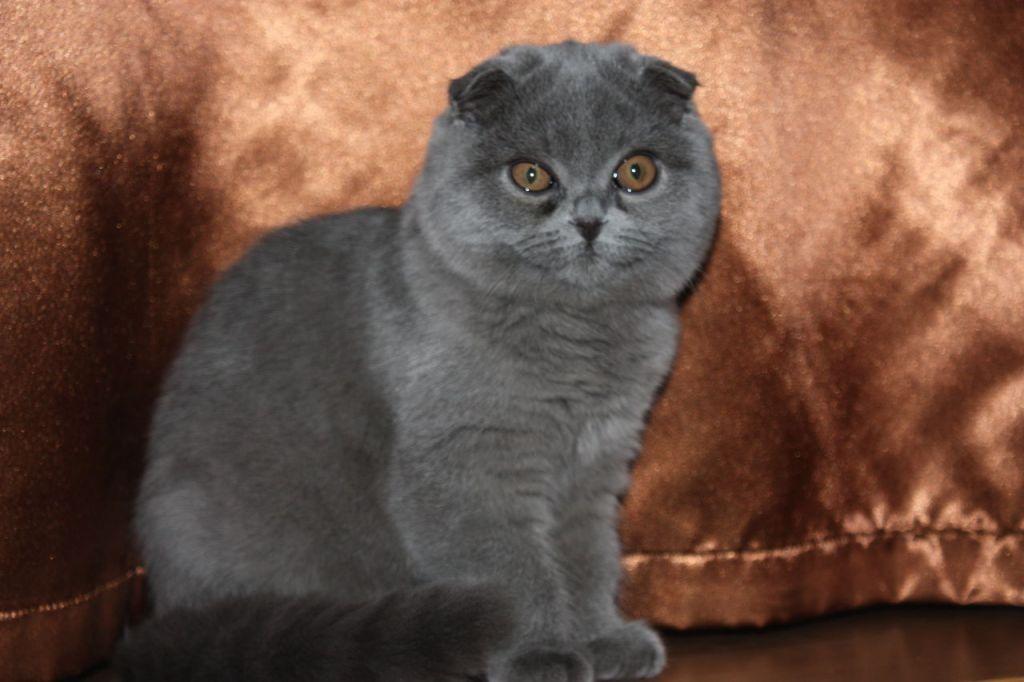 Тест котенка тентек каналының патенттілігіне жауап береді: егер фторескин біраз уақыттан кейін мұрынға түссе, онда бәрі ретпен