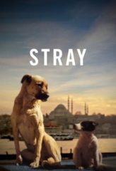 Nonton Film Stray (2020) Sub Indo Download Movie Online DRAMA21 LK21 IDTUBE INDOXXI