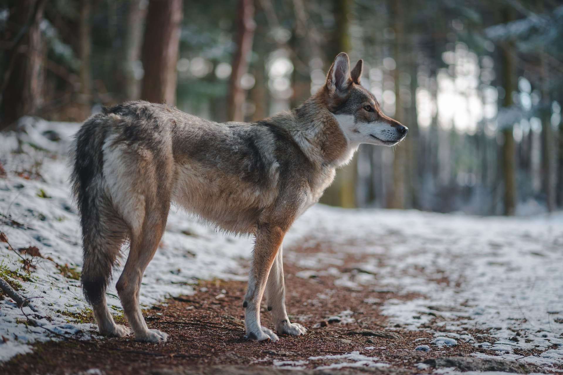 Six Tribes Sue Wisconsin Over Wolf Hunt