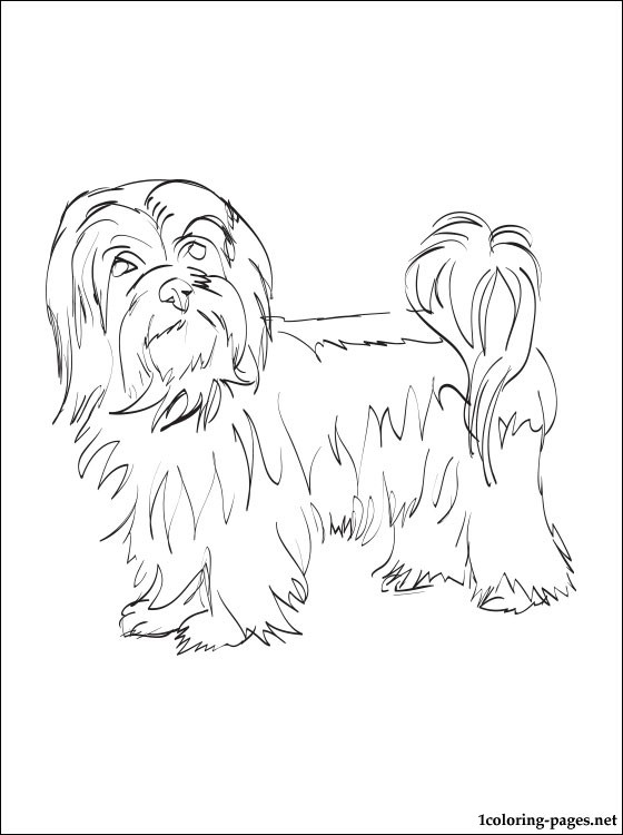 Havanese coloring page coloring pages, puppy love coloring pages