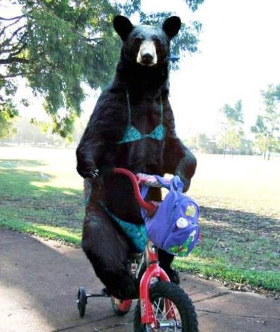 Bear Tricycle 1funny Com