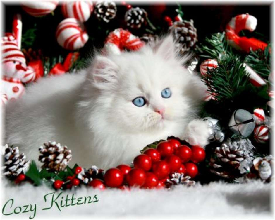 Cute Christmas Kittens (26 pics) – 1Funny.com