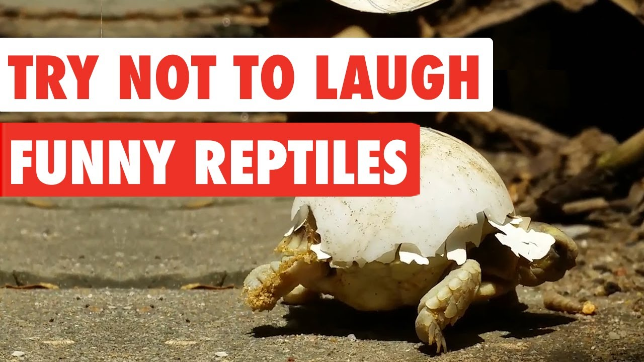 Try Not Laugh Animals