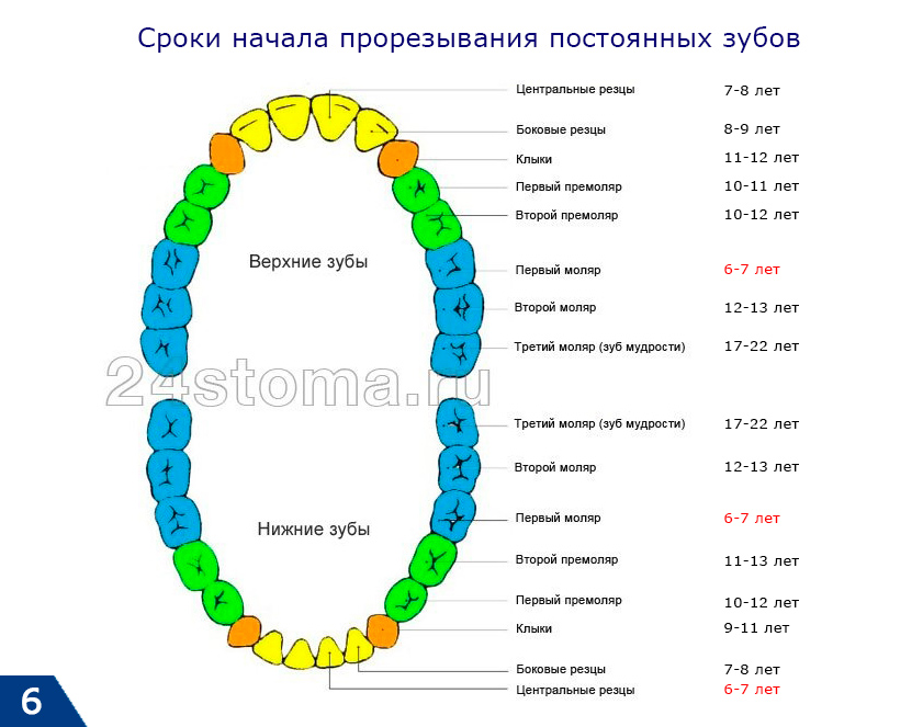Terminy na początku ząbkowania stałych zębów u dzieci