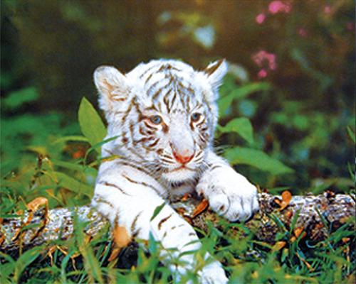 Baby Tigers Tumblr
