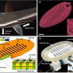 3D printed suckerfish grip could take explorers into The Great     Making of a robotic ramora  Image via Science Robotics  A biorobotic  adhesive disc for
