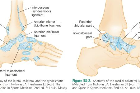 Interior Ankle Ligaments Electronic Wallpaper Electronic Wallpaper
