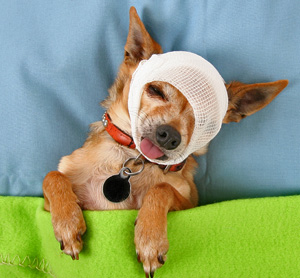 Home Remedies For Eye Infection In Dogs