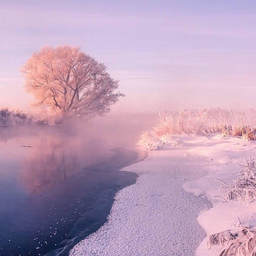 snow photography winter art design landscape trees pink ...