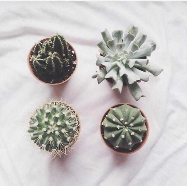 Small Garden Ideas Home