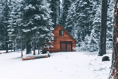 winter forest on Tumblr