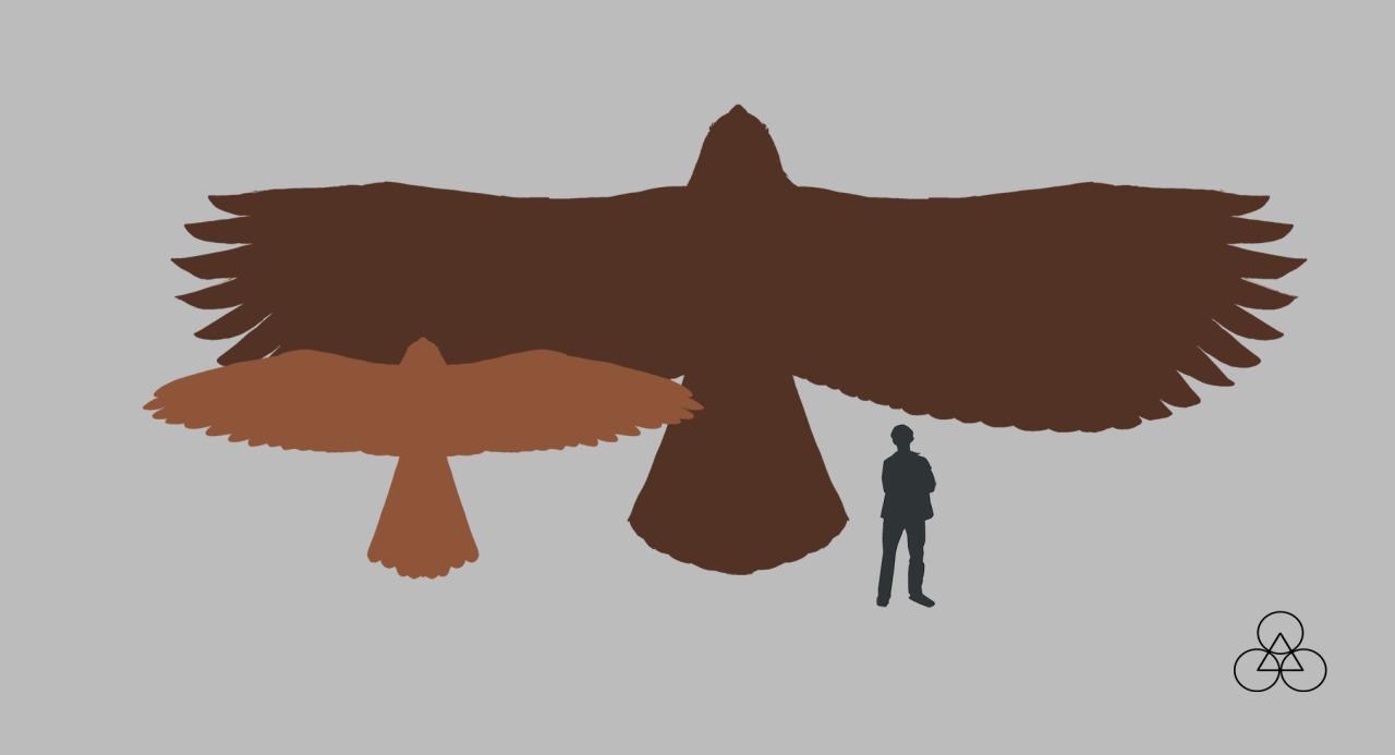 Haast S Eagle Size Comparison Diagram Bald Along With Golden Related Keywords
