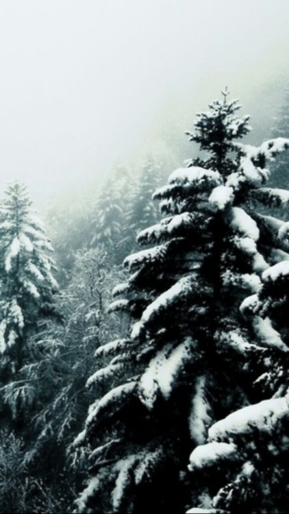 winter backgrounds on Tumblr