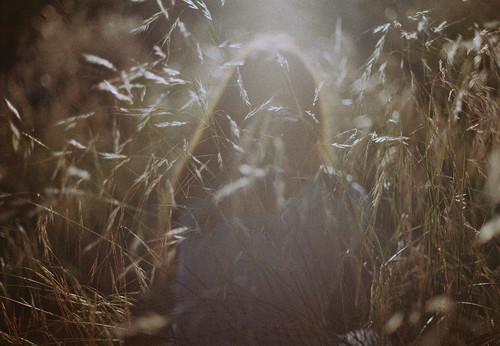 Aesthetic Woods Photography
