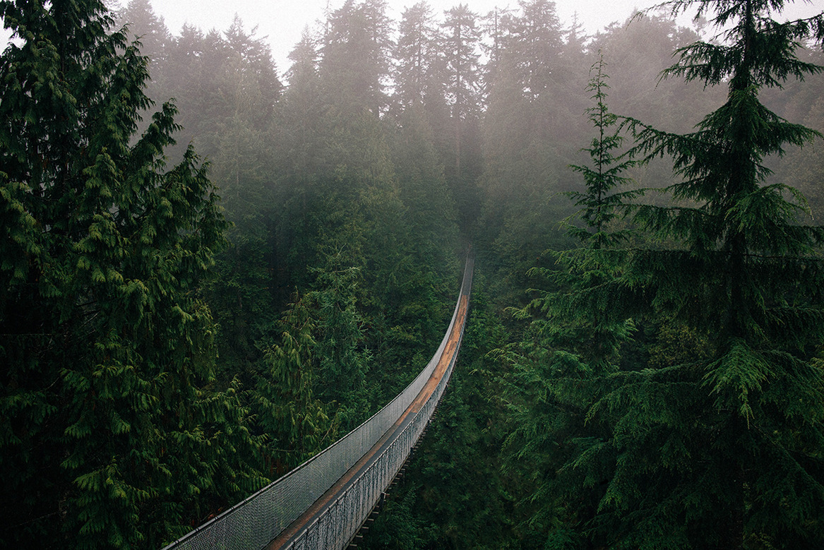 British Columbia Northern Lights