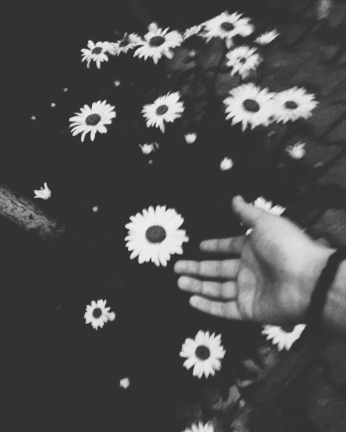 Leonardo dicaprio black and white flowers tumblr mightylinksfo