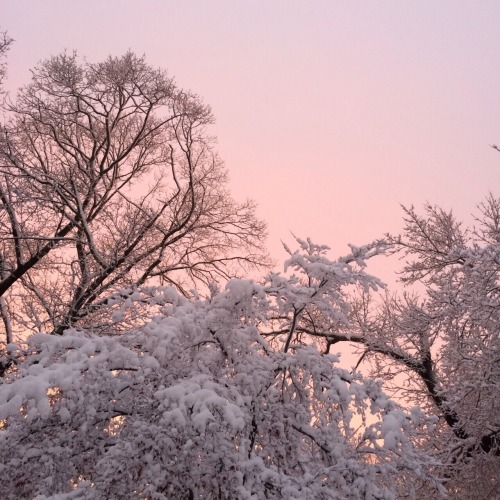 winter snow on Tumblr