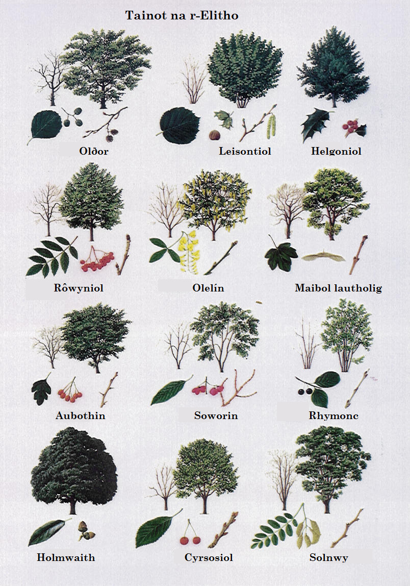 Celinese - A poster showing some of the many trees that you...
