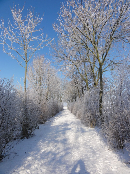 winter scenery on Tumblr
