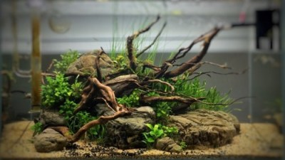 freshwater aquarium plants | Tumblr