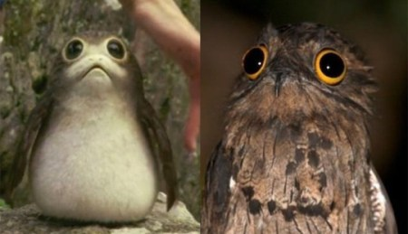 potoo birds   Tumblr The new Star Wars Porg species totally remind me of Potoo birds tbh