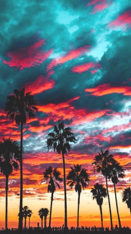 Los Angeles California Beaches Tumblr
