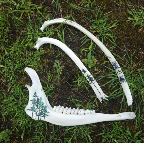 Deer Lower Jaw Bone Art