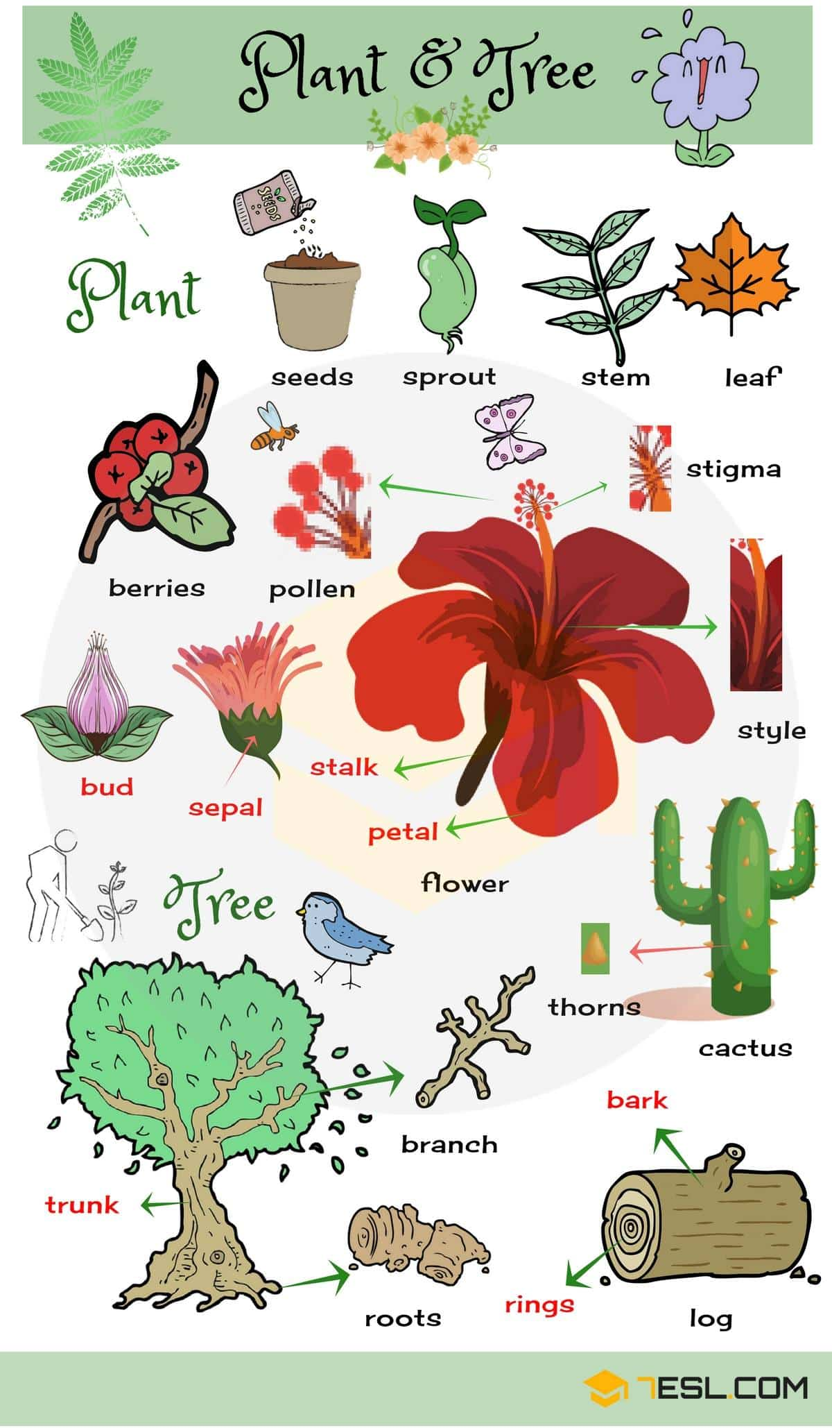 List of Plant and Flower Names in English with Pictures ...