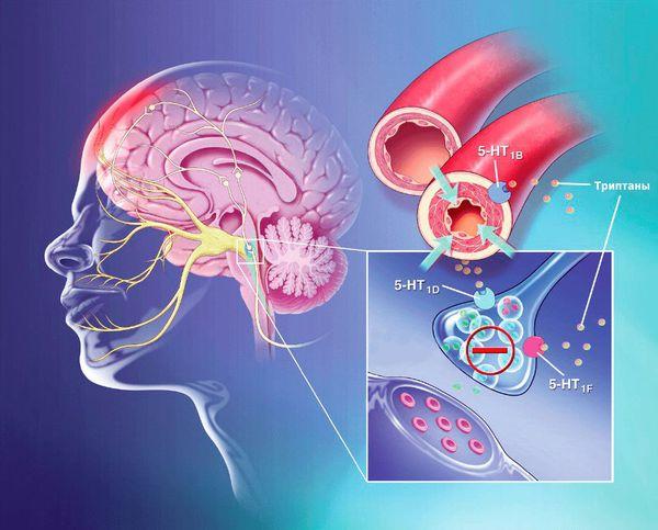 Воздействие триптанов на серотониновые рецепторы