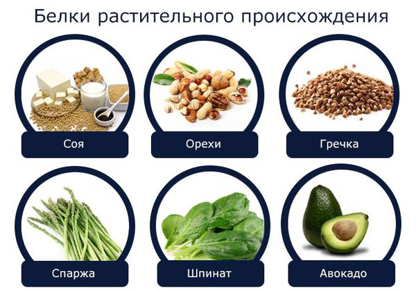 Источники растительных белков