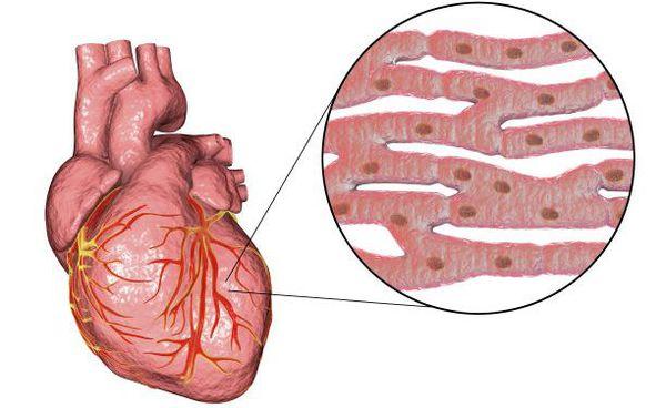 Ledende hjerte system