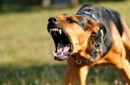 Бешеная собака фото