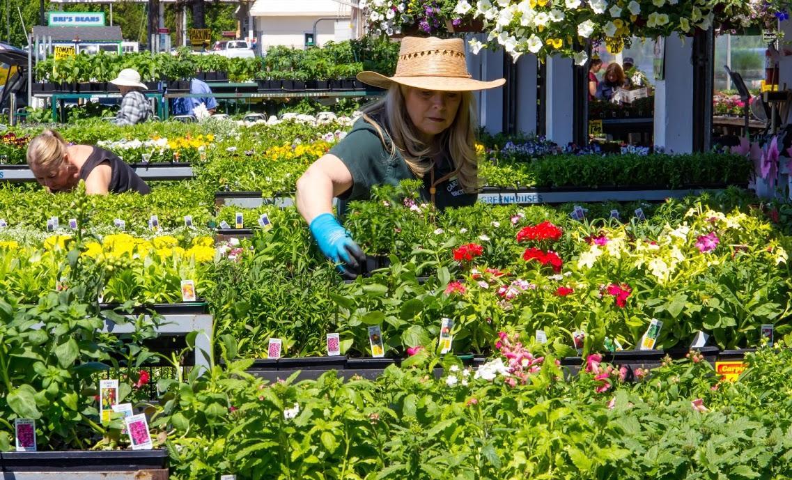 Farm Fresh Francisco Flowers San