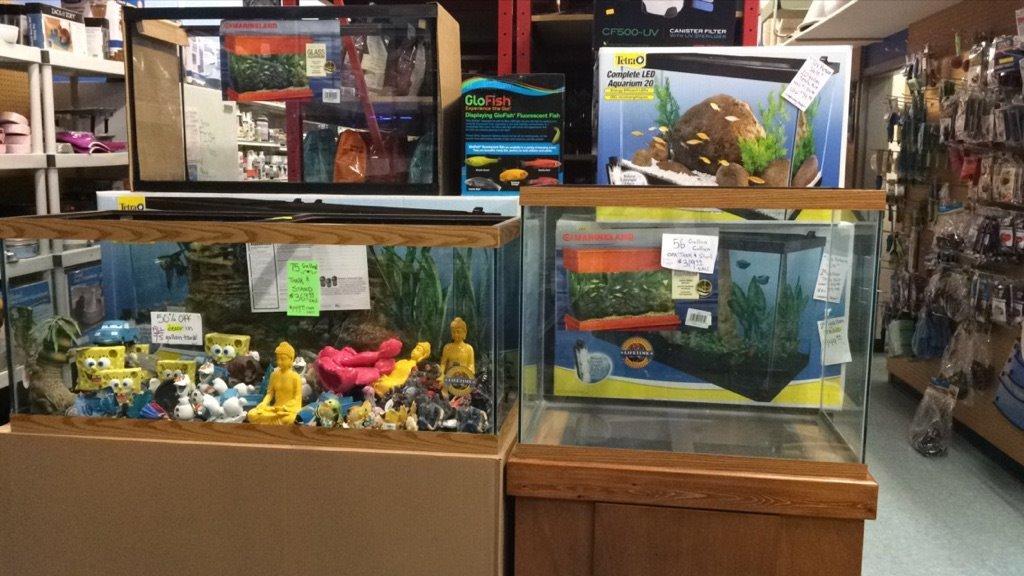 Fish Shop Near Me Pet