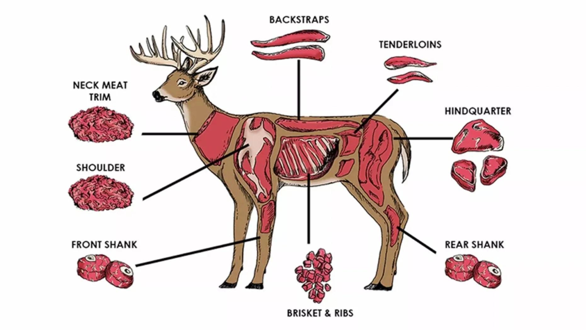 Cut Diagram Deer Venison Meat