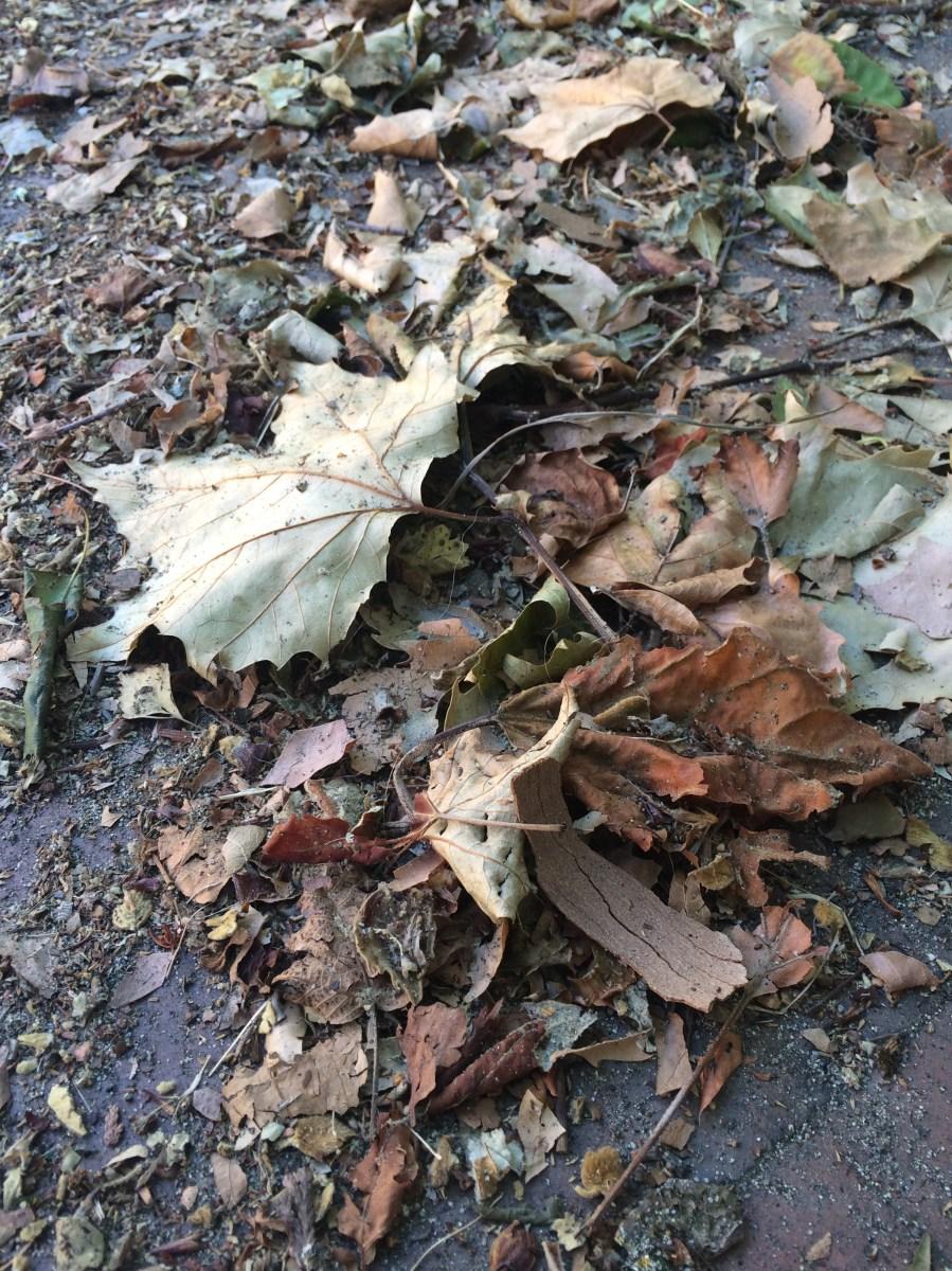 pile of leaves - HD900×1200