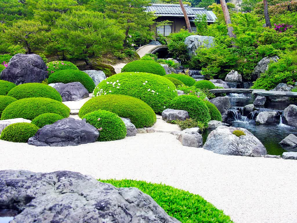 Japanese Water Garden Plants