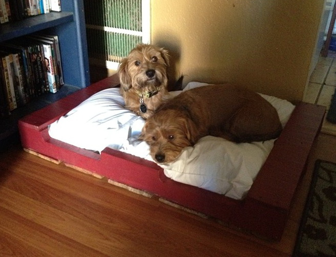 Diy Dog Bed Pallet