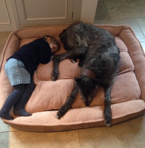 Extra Large Dog Beds Uk